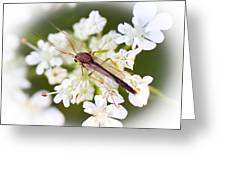 Bug On White Greeting Card by Maureen  McDonald