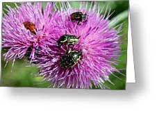Bugfest Greeting Card