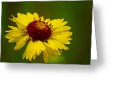 Bugged Greeting Card