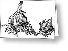 Bulbs Of Garlic, Woodcut Greeting Card by Gary Hincks