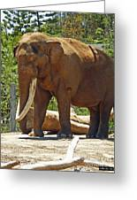 Bull Elephant Greeting Card