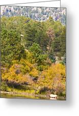 Bull Elk Lake Crusing With Autumn Colors Greeting Card