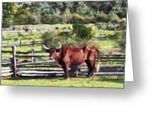 Bull In Pasture Greeting Card by Susan Savad