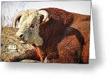 Bull It Is What It Is Greeting Card