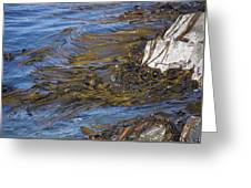 Bull Kelp Bed Greeting Card by Bob Gibbons