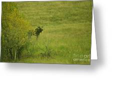 Bull Moose On The Loose  Greeting Card