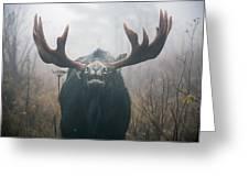 Bull Moose Testing Air For Pheromones Greeting Card