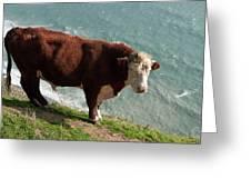 Bull On The Edge Greeting Card