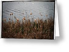 Bull Rushes And Swans Greeting Card