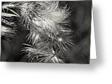 Bull Thistle Monochrome Greeting Card