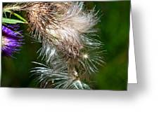 Bull Thistle Greeting Card