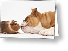 Bulldog & Guinea Pig Greeting Card