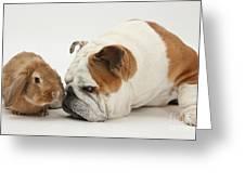 Bulldog And Lionhead-cross Rabbit Greeting Card