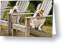 Bulldogs Relaxing At The Beach Greeting Card