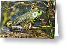 Bullfrog 1 Greeting Card