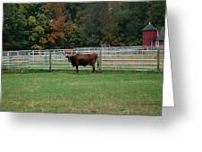 Bully Bull Greeting Card