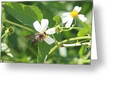 Bumble Bee 1 Greeting Card