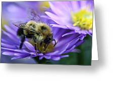 Bumble Bee And Fall Aster Greeting Card