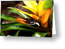 Bumble Bee Dart Frogs Greeting Card