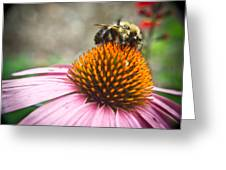 Bumble Bee Feeding On A Coneflower Greeting Card