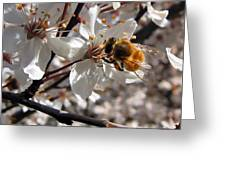 Bumble Bee On A Cherry Blossom Greeting Card