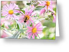 Bumble Bee On Asters Greeting Card