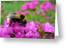 Bumble Bee Searching The Pink Flower Greeting Card