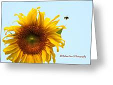Bumble Bees Love Sunflowers Greeting Card
