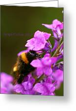 Bumble Greeting Card by Jacqui Collett