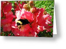 Bumblebee And Snapdragon Greeting Card