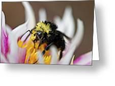 Bumblebee Attacking Flower Greeting Card