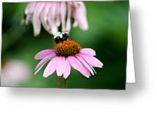 Bumblebee Bliss Greeting Card