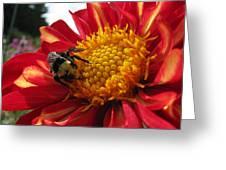Bumblebee Dahlia 1 Greeting Card