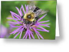 Bumblebee On A Purple Flower Greeting Card