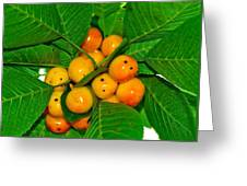 Bunch Of Cherries Greeting Card