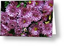 Bunch Of Chrysanths Greeting Card