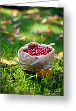 Bunch Of Cranberries Greeting Card