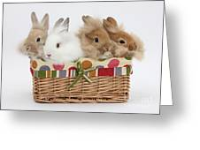 Bunnies In A Basket Greeting Card