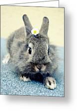 Bunny Greeting Card by Falko Follert
