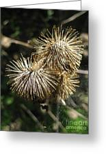 Burdock With Spiderweb Greeting Card