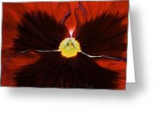 Burgandy Pansy Greeting Card