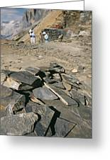 Burgess Shale Fossil Quarry Greeting Card