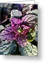 Burgundy Glow Bugleweed Greeting Card