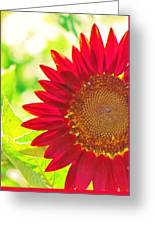 Burgundy Sunflower Greeting Card