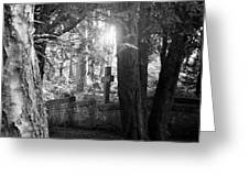 Buried In The Woods Greeting Card