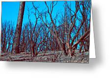 Burned Trees And The Sky Greeting Card