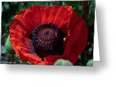 Burning Poppy Greeting Card
