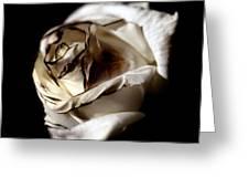 Burnt Tea Rose Greeting Card