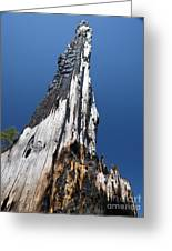 Burnt Tree V Greeting Card