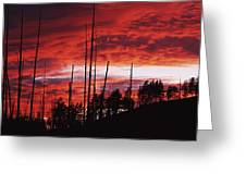 Burnt Trees Against A Sunset Greeting Card